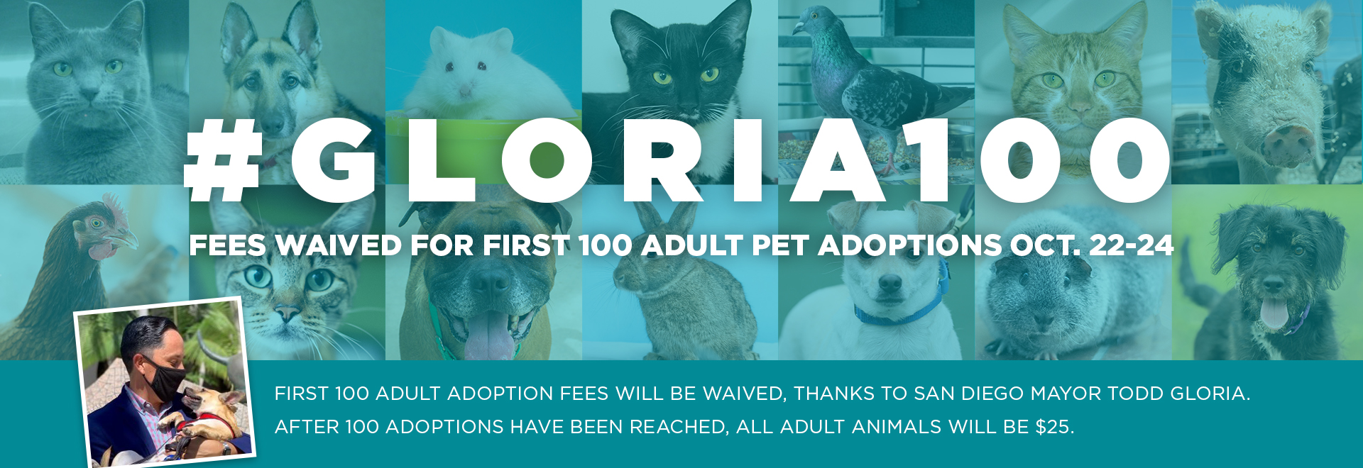 Fees waved for first 100 adult pet adoptions October 22-24 2021