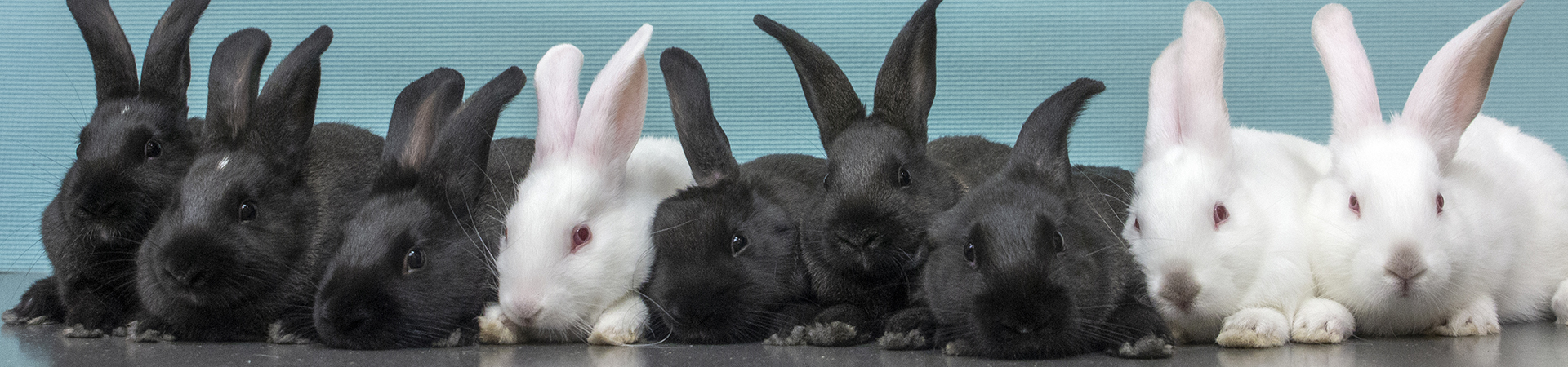 a large group of rabbits sit in a row.