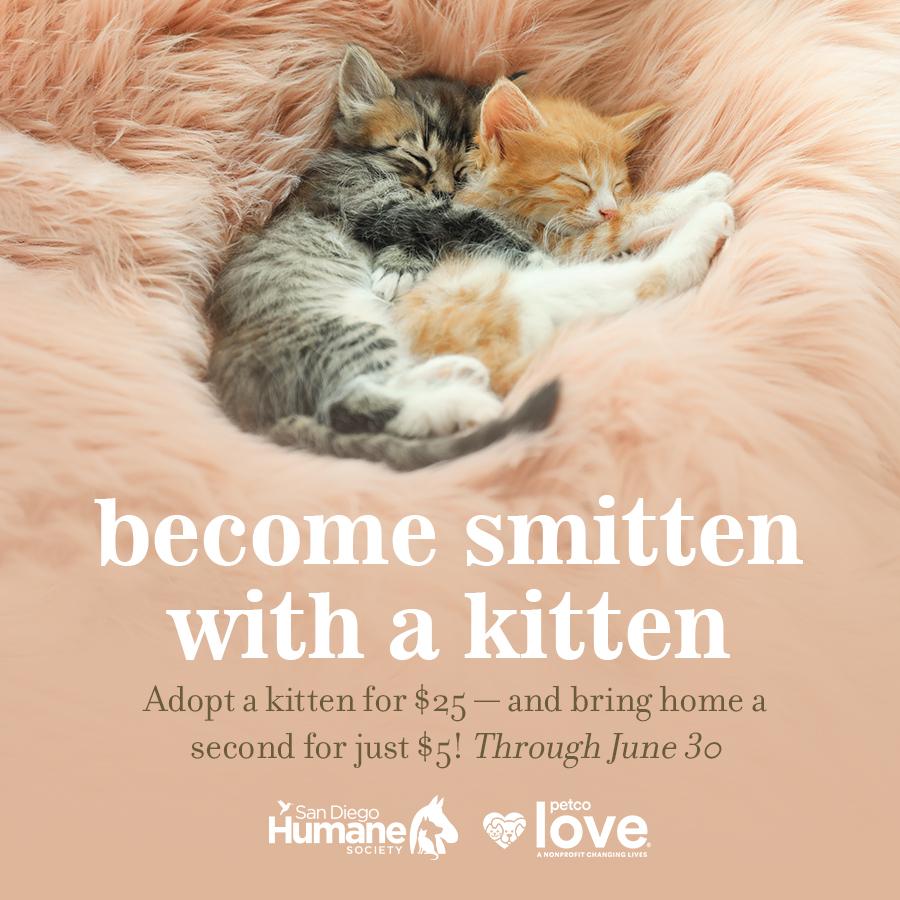 Smitten Kitten Promotion