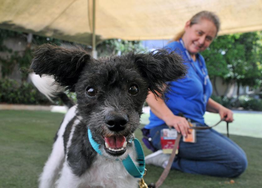 Volunteer information | San Diego Humane Society