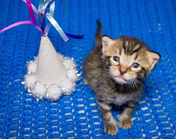 10,000 kitten