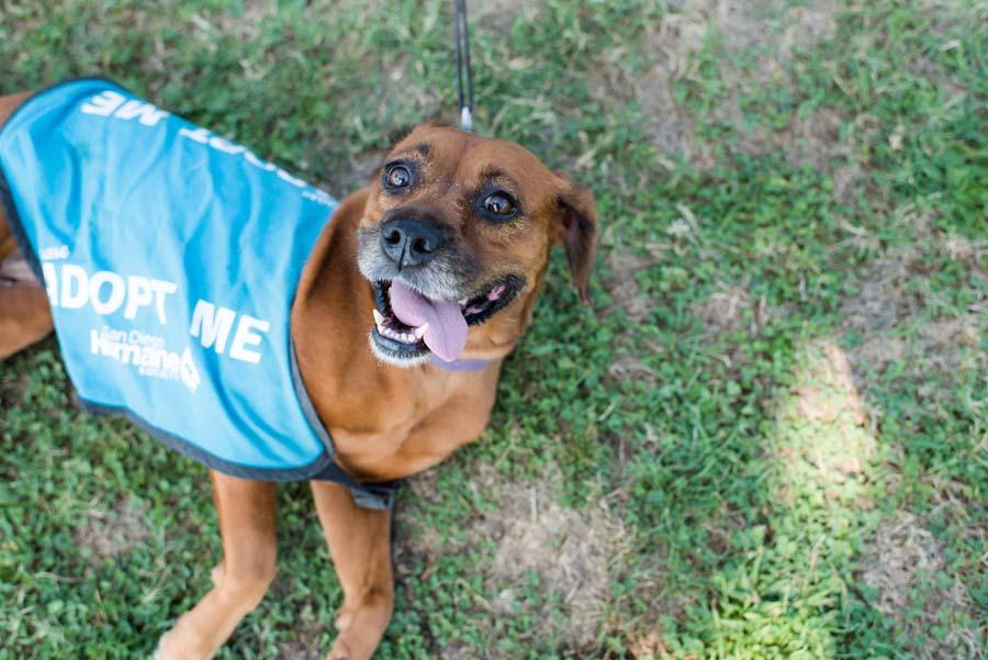 Rescue Partners   San Diego Humane Society