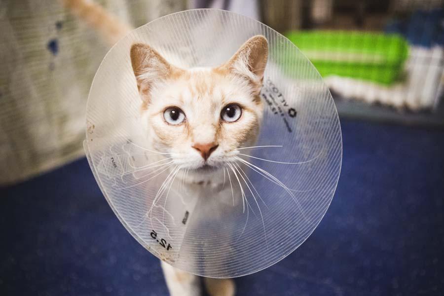 Post Adoption Complimentary Veterinary Exam List   San Diego