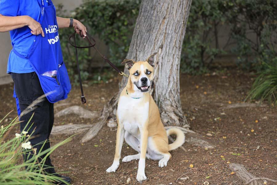 Volunteer Login San Diego Humane Society
