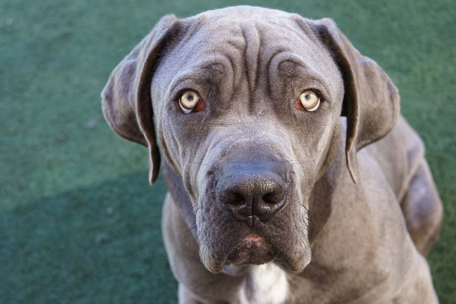 Humane Euthanasia and After Care Services | San Diego Humane