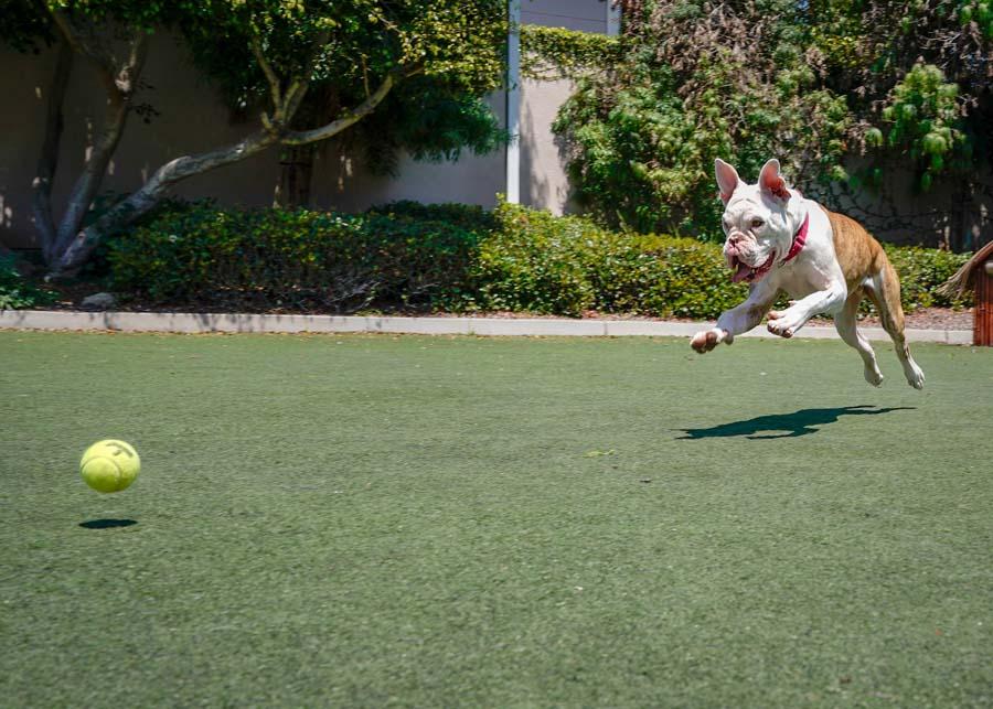 Behavior and Training | San Diego Humane Society