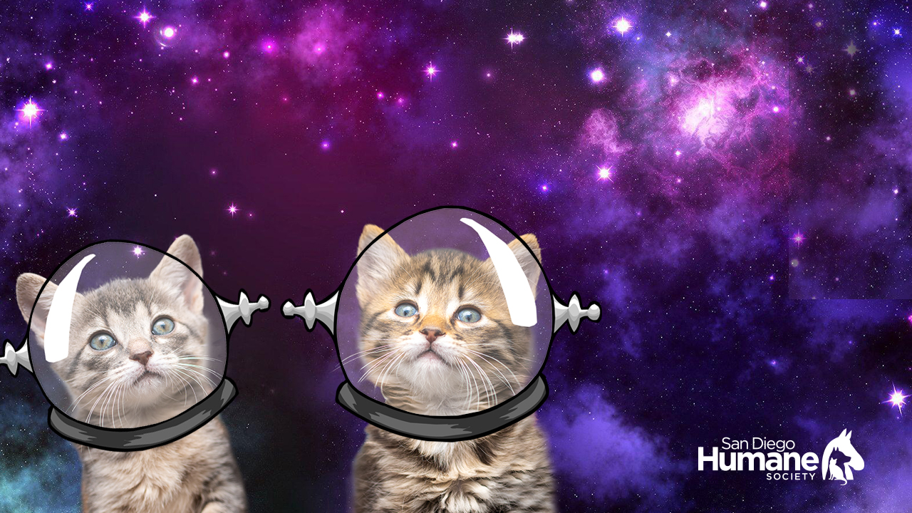 space_cats