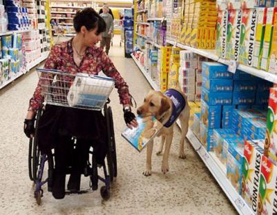 A women grocery shops from a wheelchair with the support of her loyal service dog.