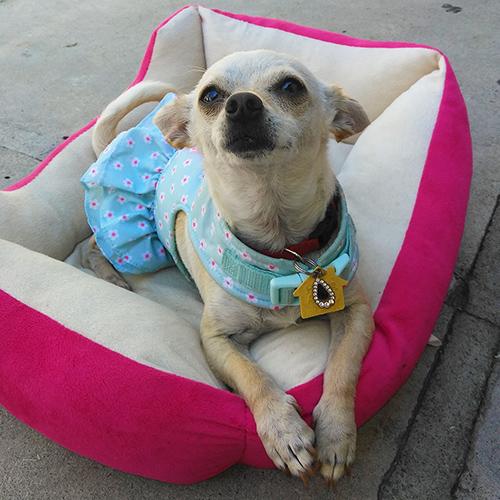 Home | San Diego Humane Society